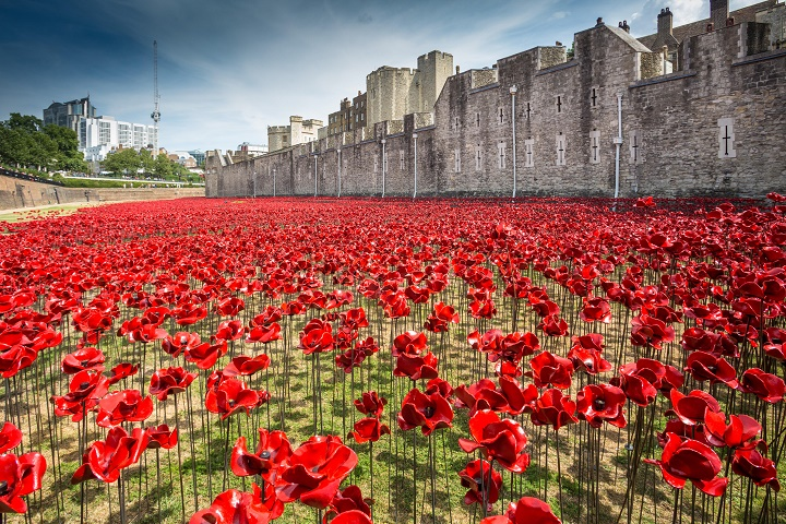 Poppies at the Tower of London - 2014.